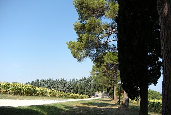 The garden of the agritourism